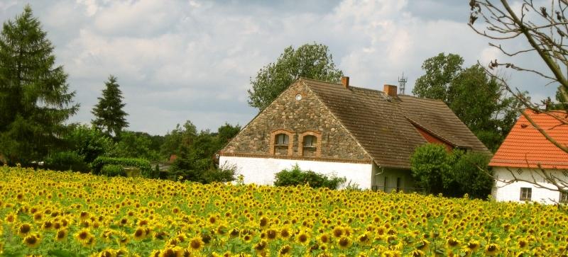 bauernhof urlaub in mecklenburg schwerin bauernh fe f r landurlaub. Black Bedroom Furniture Sets. Home Design Ideas