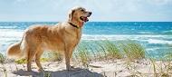 Ferienwohnungen und Ferienhäuser für Hundeurlaub in den Inselbädern