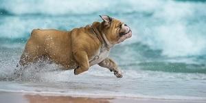 Hundefreundliche Ferienunterkünfte