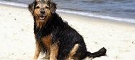 Ferienwohnungen und Ferienhäuser für Hundeurlaub am Jasmunder Bodden