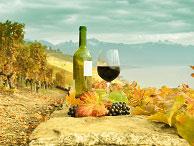 Urlaub in den 13 deutschen Weinanbaugebieten