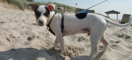 Urlaub mit hund auf der insel r gen unterkunft mit haustier erlaubt for Urlaub auf juist mit hund