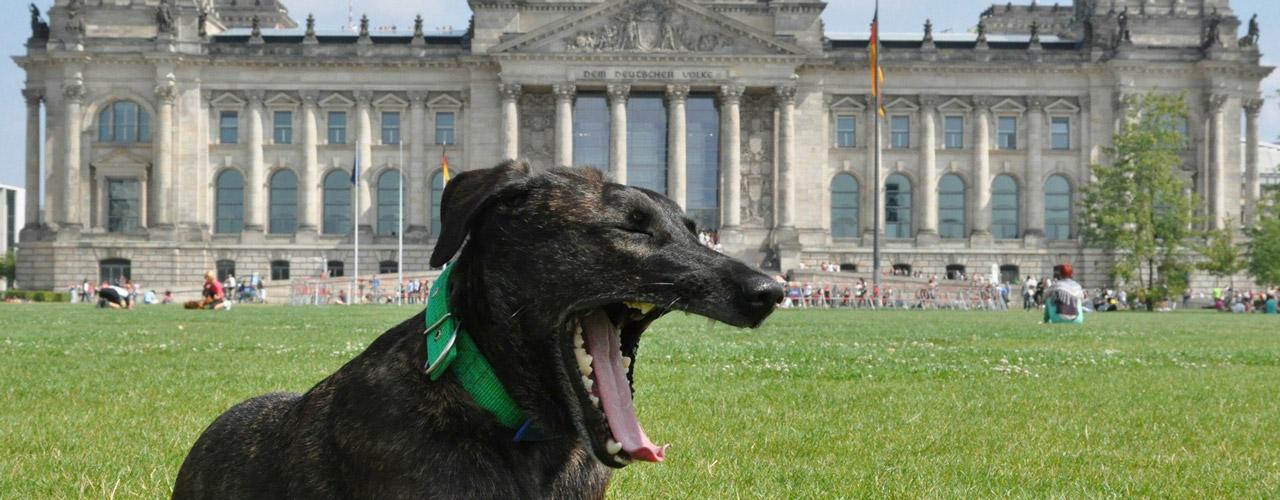 ferienhaus ferienwohnung mit hund in berlin. Black Bedroom Furniture Sets. Home Design Ideas