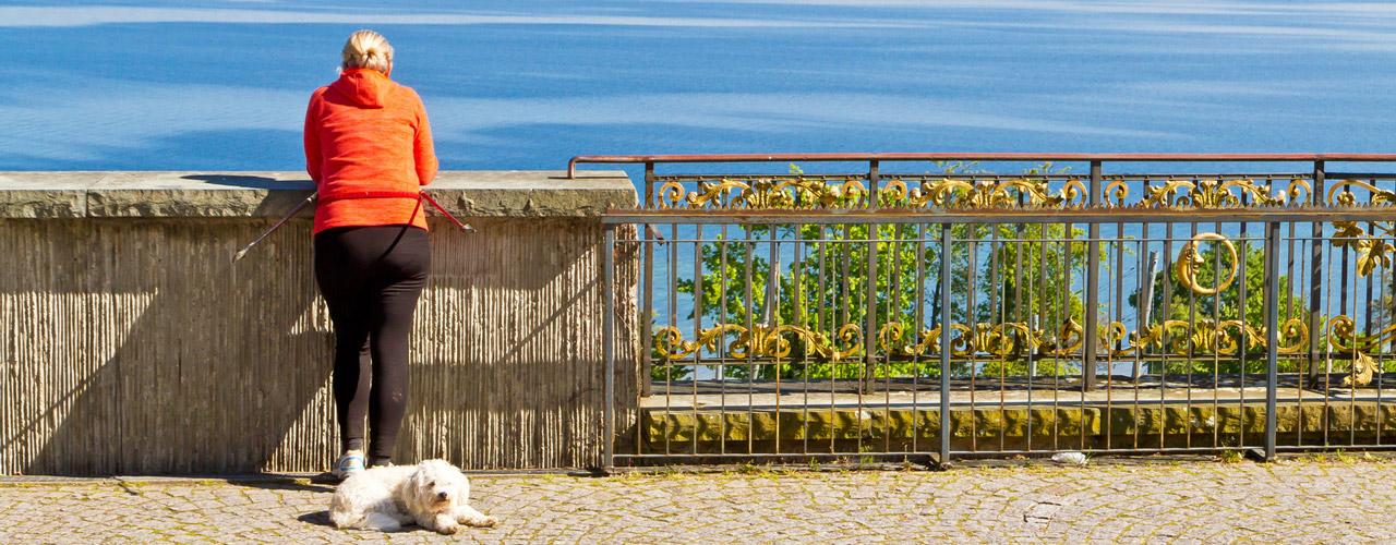 Ferienwohnung Ferienhaus Mit Hund Friedrichshafen