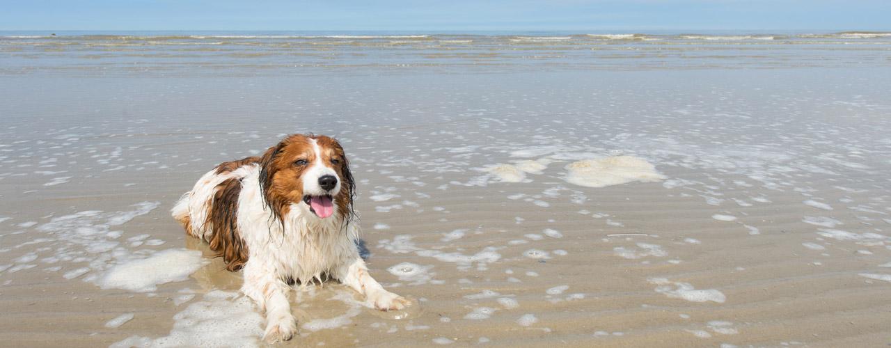 Urlaub mit hund in butjadingen unterkunft mit haustier for Ferienhaus juist mit hund