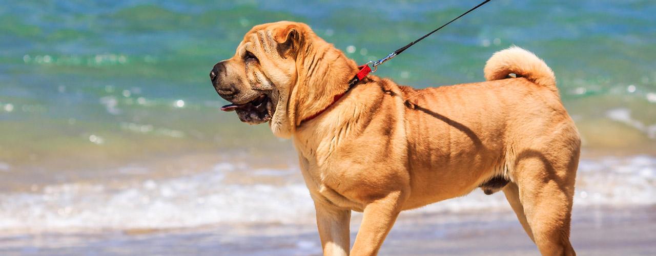 Traum ferienwohnung mit hund nordsee niedersachsen in for Ferienwohnung mit fruhstuck nordsee