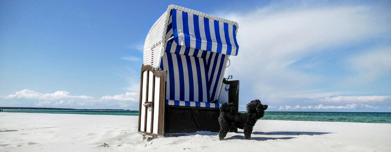 ferienwohnung ferienhaus mit hund prerow. Black Bedroom Furniture Sets. Home Design Ideas