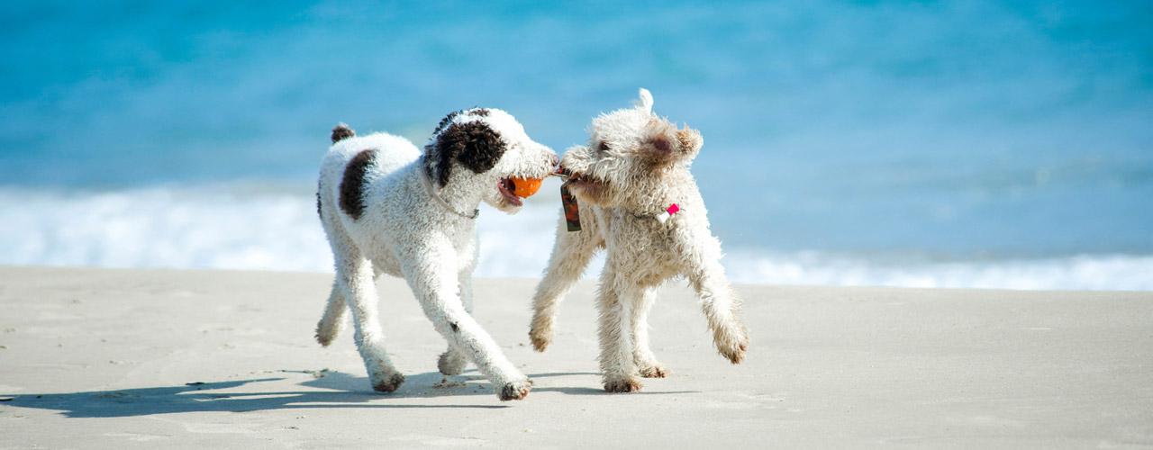Urlaub mit hund auf der insel r gen unterkunft mit for Ferien auf juist mit hund