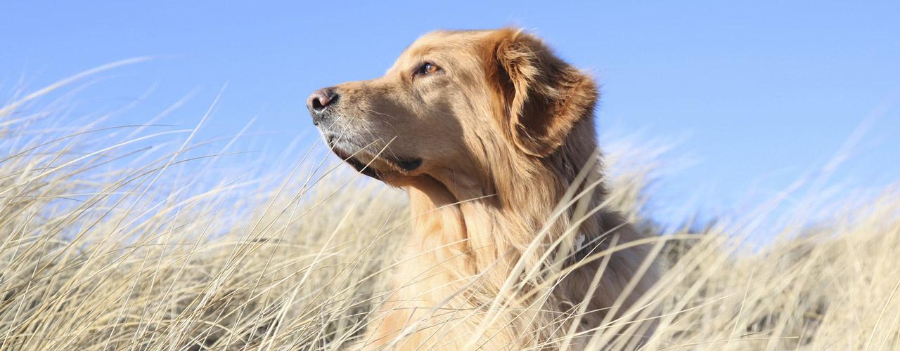 Urlaub mit hund auf sylt unterkunft mit haustier erlaubt for Urlaub auf juist mit hund