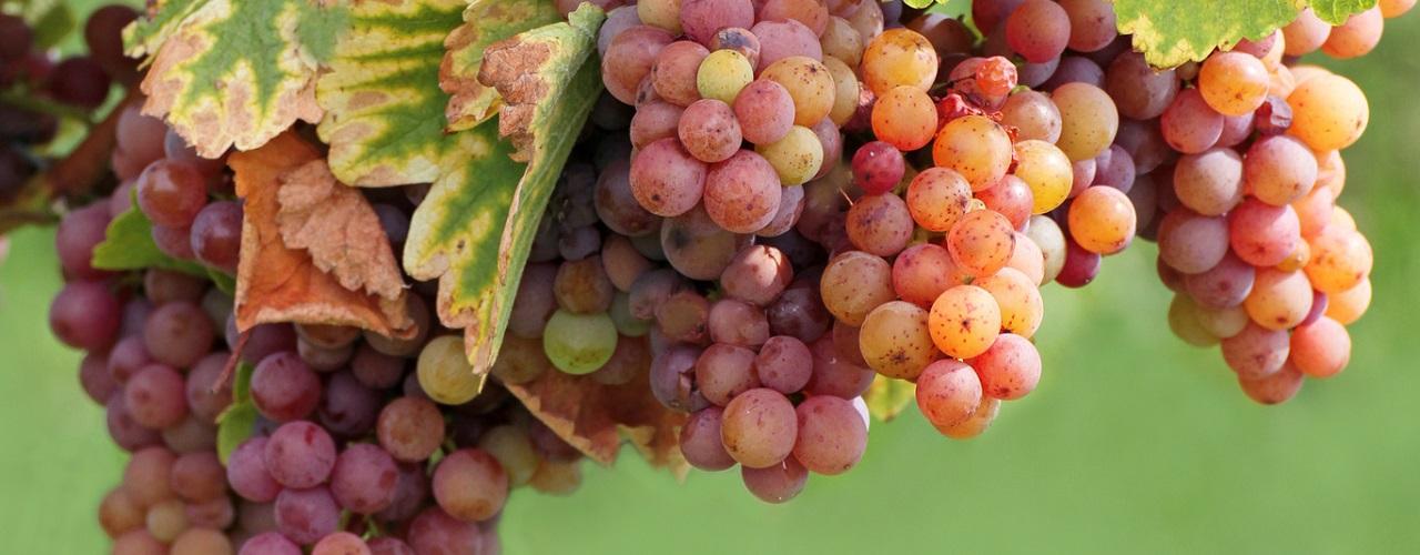 Weinurlaub in den 13 Weinanbaugebieten Deutschlands